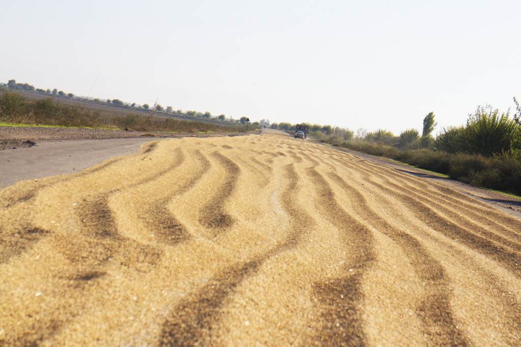 The roads were filled with drying grain.