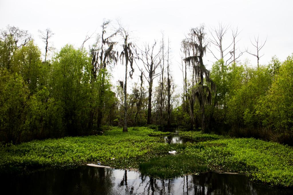 Bonus swamp!